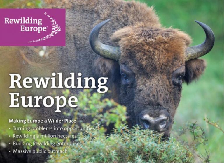 Rewilding Europe cherche à rendre l'Europe plus sauvage