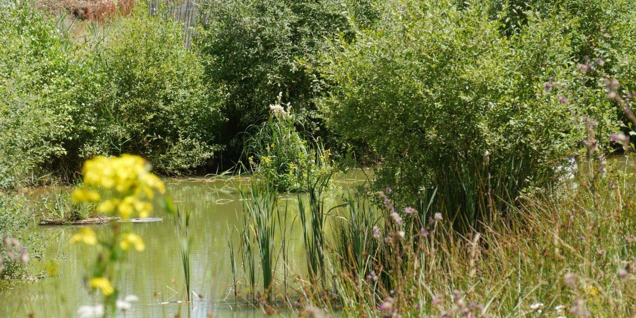 Le blog sur la biodiversité en transition