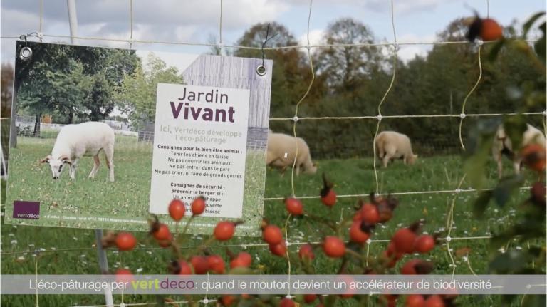 eco paturage mouton